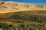 2009 Yakima Valley & Prosser winetrip