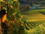 An impromptu visit to the Willamette Valleywineries